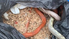 Shocked resident finds five dead snakes in bin