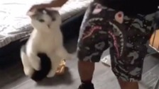 Watch: Man violently beats cat in Snapchat video