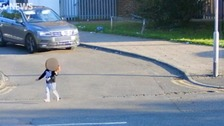 Driver to the rescue after toddler runs into busy road