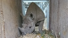 Flamingo Land's rare rhino flies to Africa to be freed