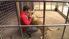 Man applies to keep two lions and puma in farm enclosure