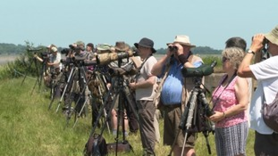 Twitchers waiting to get a glimpse of the little bustard.