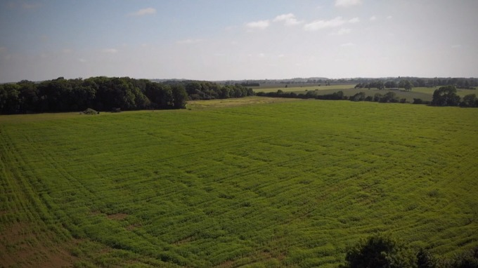 Largest UK study of its kind sees 200 million hemp plants cultivated