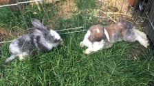 Appeal after seven rabbits found dumped among fly-tipped rubbish