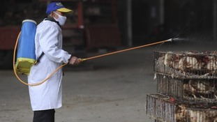 An employee wearing a protection suit sprays disinfectant on chickens at a poultry market in Hefei, Anhui province.