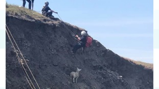 Warning to dog owners after cliff face lamb rescue in Cornwall