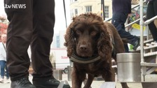 Sniffer dog skills highlighted in illegal tobacco campaign