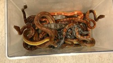 Box of snakes found dumped outside vet's surgery