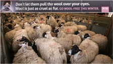The PETA advert compared wool to fur.