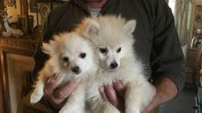 Search is on to find two adorable pups 'snatched' from home