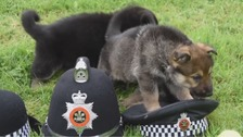 South Wales Police ask public to help name future police dogs
