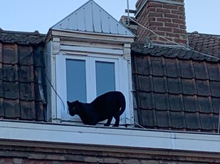 The cat was walking on residential buildings.