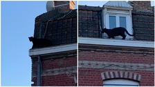 Fur real? Panther spotted strolling on rooftops in small French town