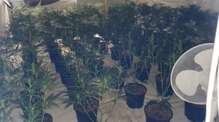 Cannabis plants worth more than £1 million seized from Gloucestershire industrial unit