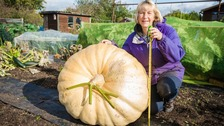 Gigantic pumpkin grown by woman from Leicester