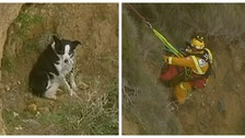 Stranded dog rescued after getting stuck on Australian cliff