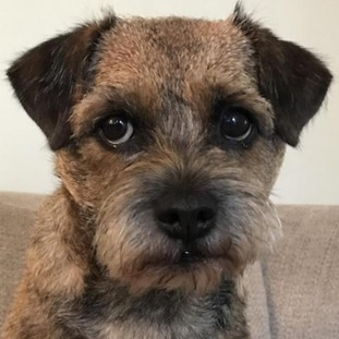 Maggie the border terrier is terrified of fireworks and becomes a nervous wreck