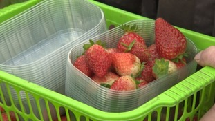 Many farms employ people from Europe to pick fruit.