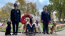 Injured police officer's dog honoured in national parade