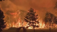 Australians told to flee homes as wildfires sweep across NSW