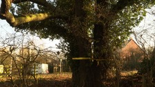 Thousands sign to save 400-year-old oak tree