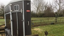 Suspected illegal immigrants found hiding in horse box