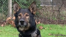 Police Dog finds lost wedding ring in minutes