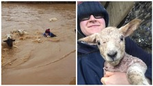 Farmer filmed wading through floodwater to save flock of sheep in Derbyshire