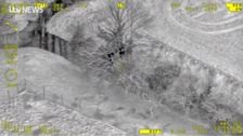 WATCH: Police catch Bradford burglars hiding up tree