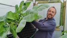 Man feeds neighbours with world record-winning giant vegetables