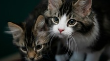 Cats should stay home when owners are self-isolating, say vets