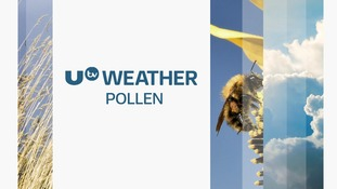 NI Pollen Count: Low