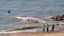 40-foot dead whale washes up on beach in Essex