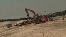 Giant 40-foot whale carcass removed from Essex beach