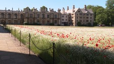 Wildflower meadow planted on King's College lawn in bid to increase biodiversity