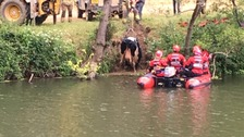 Fire crews rescue cow from River Avon near Bath