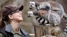 Zoos, safari parks and drive-in cinemas can reopen in England from June 15