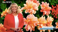 Emma Jesson in front of pollen picture of orange dahlias