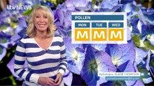 Emma in blue and white striped jumper in front of blue hydrangea photo and moderate pollen counts for Monday Tuesday Wednesday