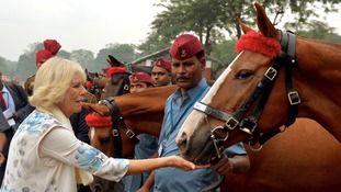 The Duchess treats the horses at the Indian Military Academy in Dehradun.
