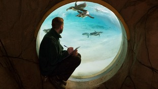 Zoo keeper Carl Ashworth, counts the penguins.