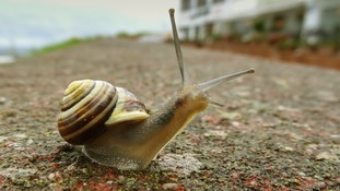 Scientist attempt to create new pain drug from... snail venom