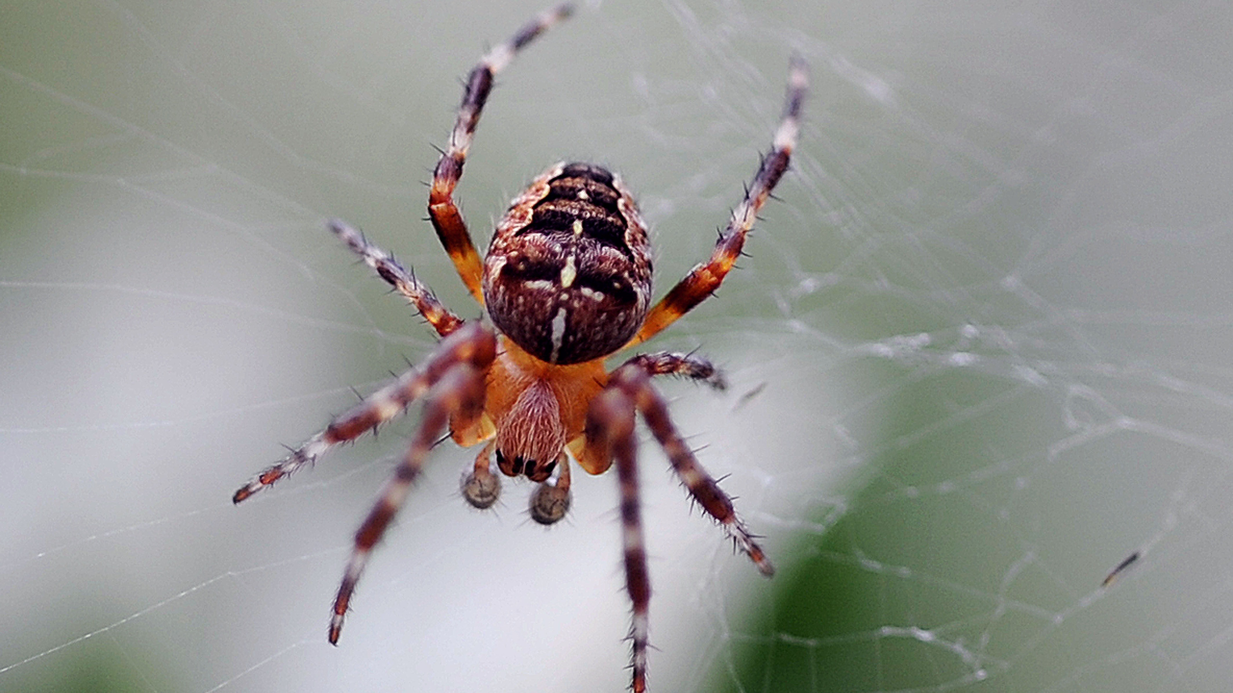 man accidentally sets house on fire trying to kill spider