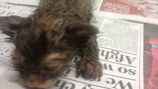 Oil drenched kitten with hours left to live is found dumped in barrel