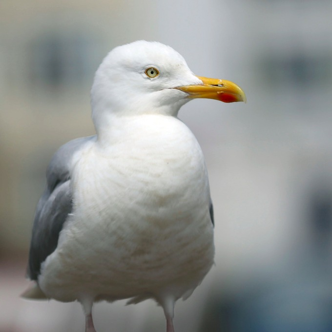 Council seek solution to 'aggressive' seagulls in Brighton