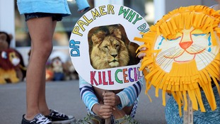 Protests have been held outside Walter Palmer's house and dentist practice in the US.