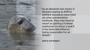 The RSPCA has defended its policy on seal shooting