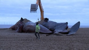 The bodies of two whales on a beach in Skegness