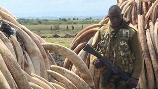 Kenya is set to burn more than 100 tonnes of ivory