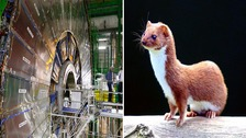 One of the world's most complex machines was immobilised by a weasel.